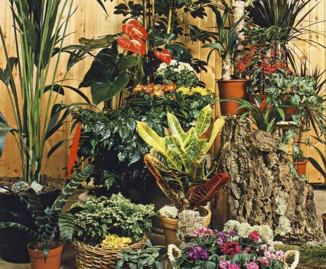 Какие цветы должны быть в доме обязательно 10 растений